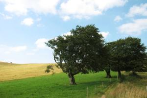 cropped-landschaftspflege3.jpg